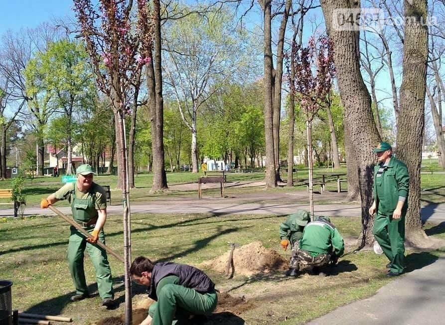 В Ірпені до кінця цього року висадять 10000 дерев, фото-1