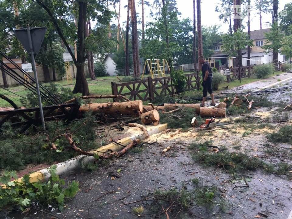 У Бучі буревій повиривав з коренем дерева, фото-1