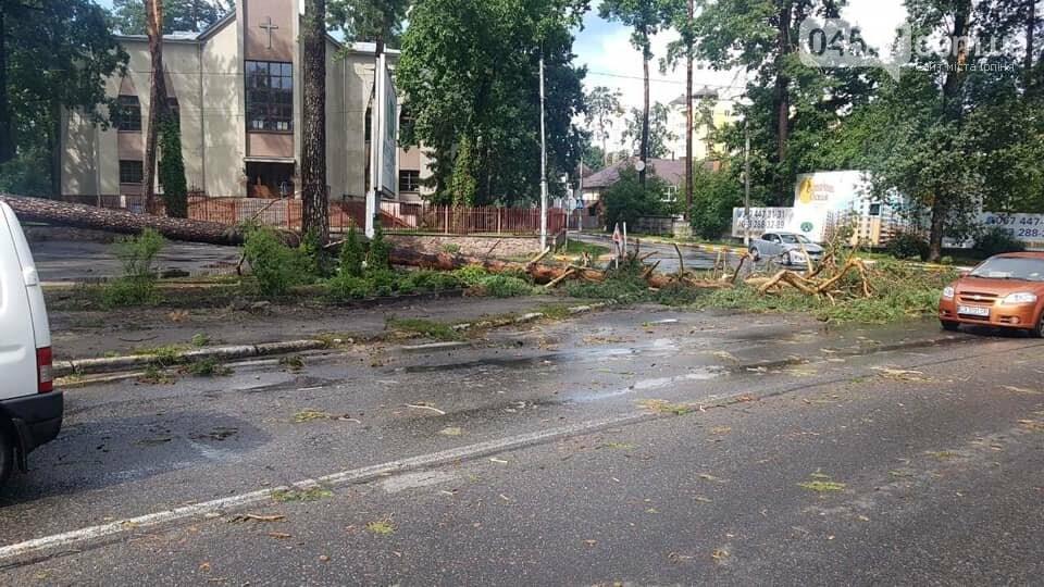 У Бучі буревій повиривав з коренем дерева, фото-5