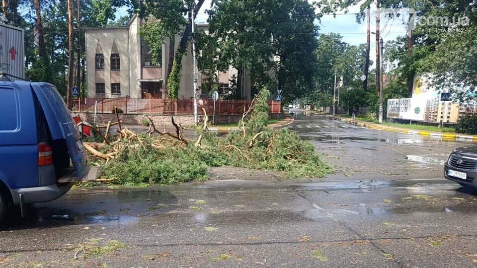 У Бучі буревій повиривав з коренем дерева, фото-4