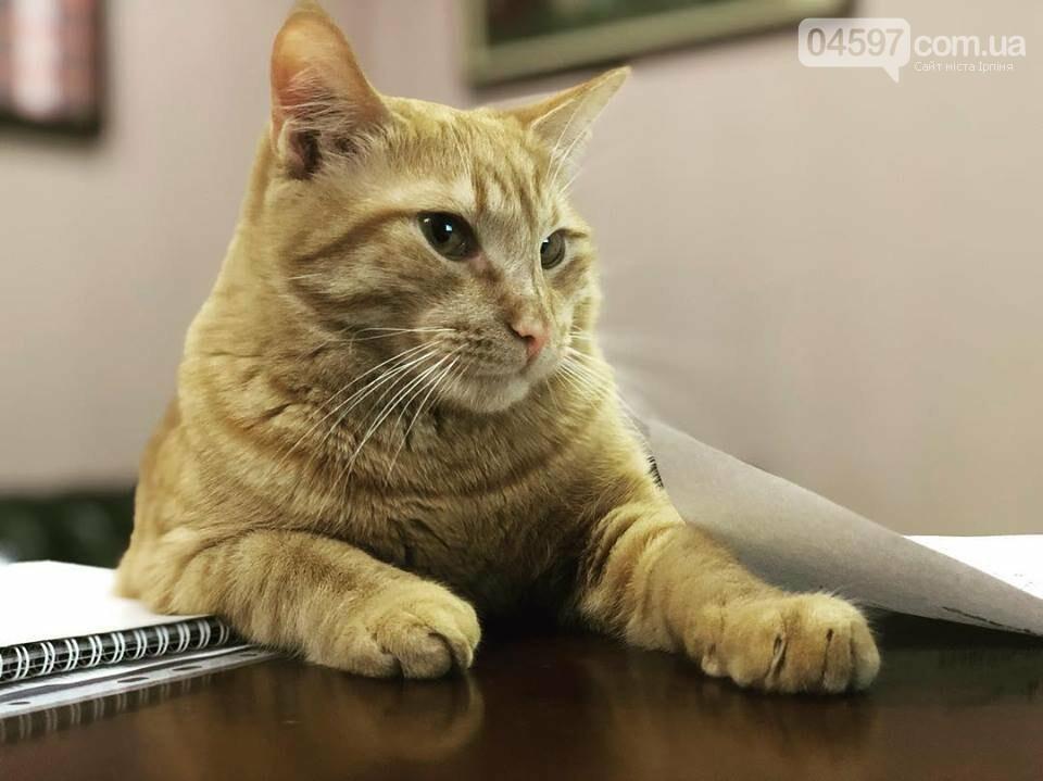 Зник кіт Щербини - бучанців просять допомоги у пошуку, фото-1