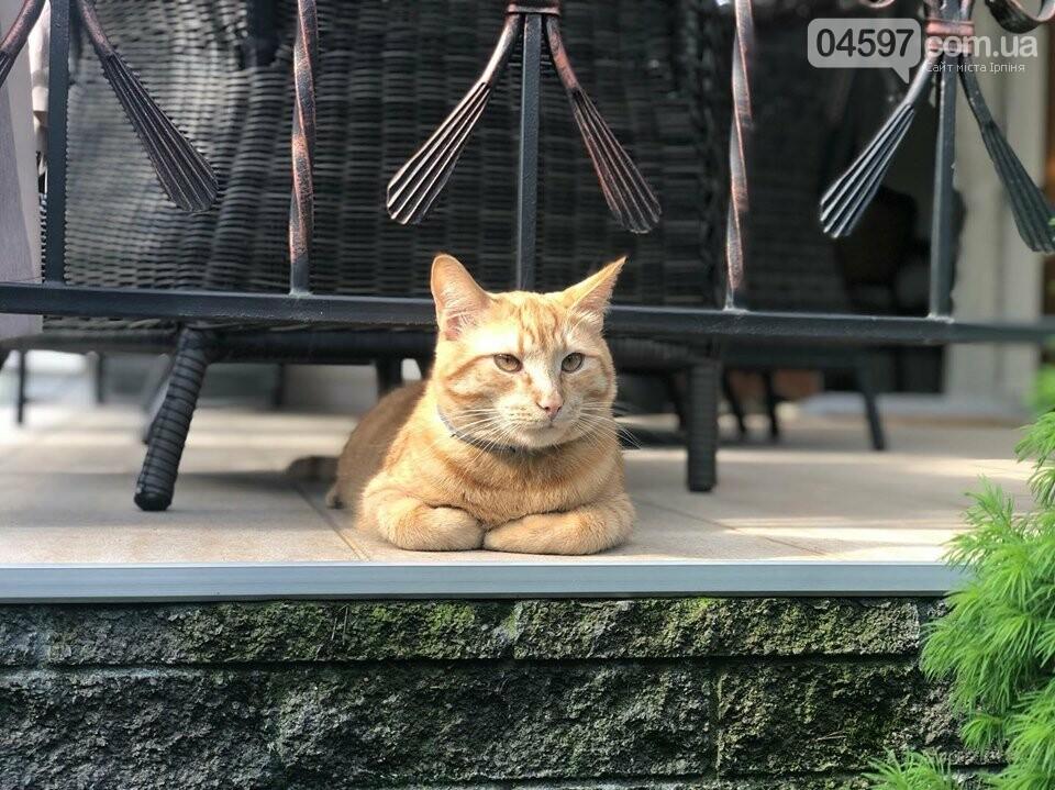 Зник кіт Щербини - бучанців просять допомоги у пошуку, фото-3
