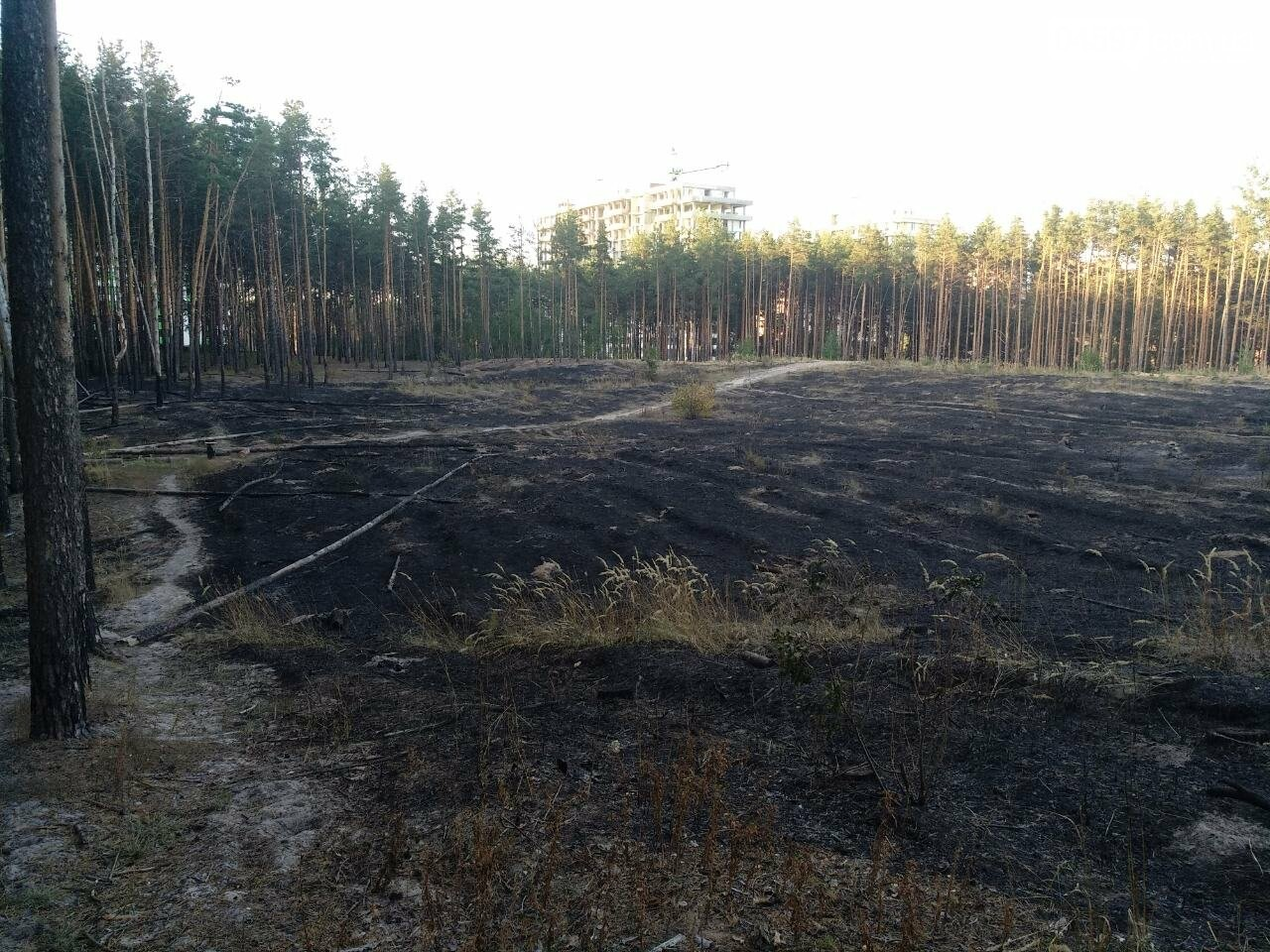 Як виглядає ірпінський ліс після пожежі - фото, фото-3