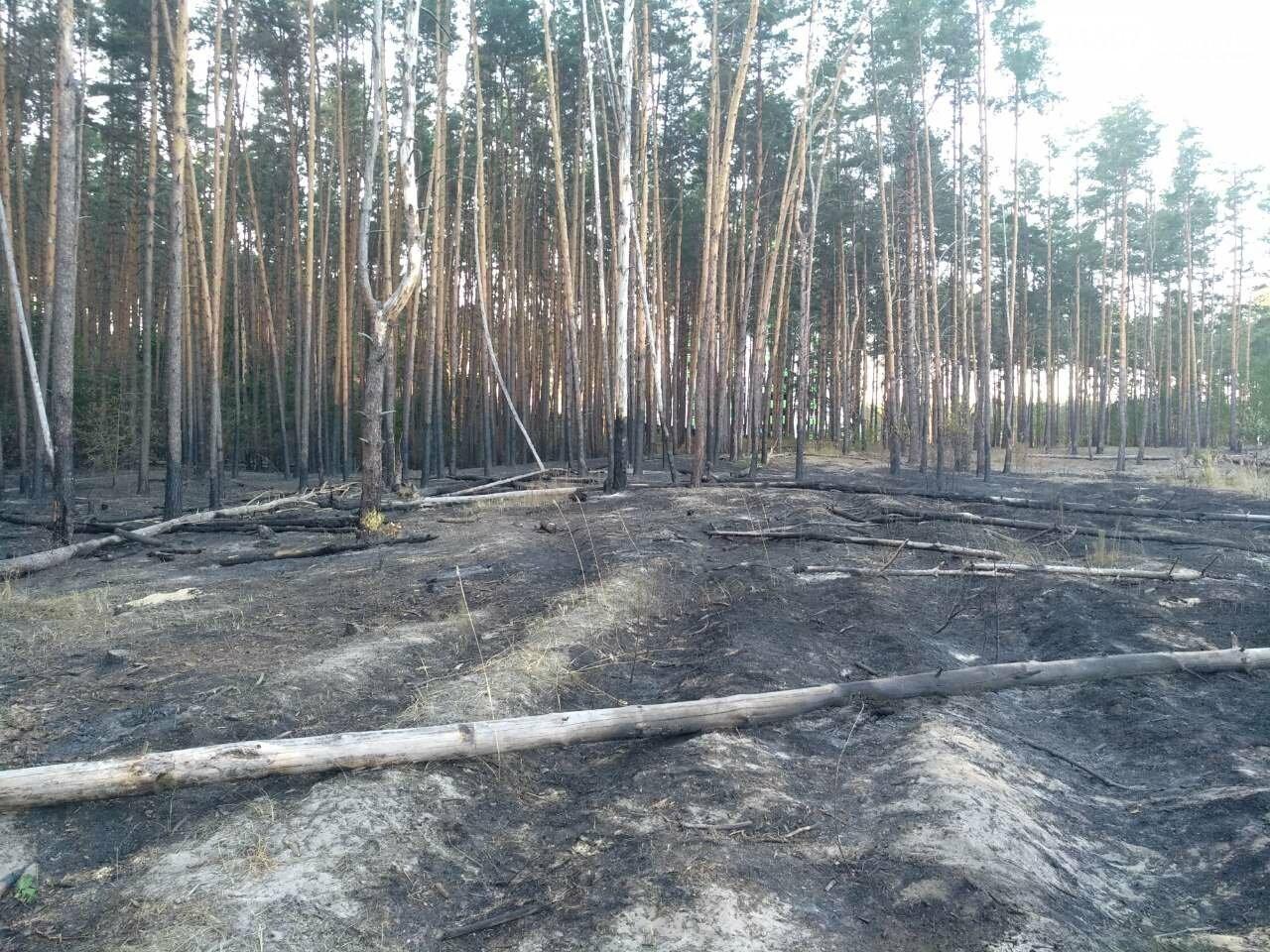 Як виглядає ірпінський ліс після пожежі - фото, фото-1