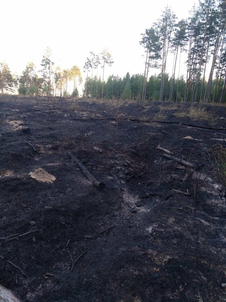 Як виглядає ірпінський ліс після пожежі - фото, фото-2