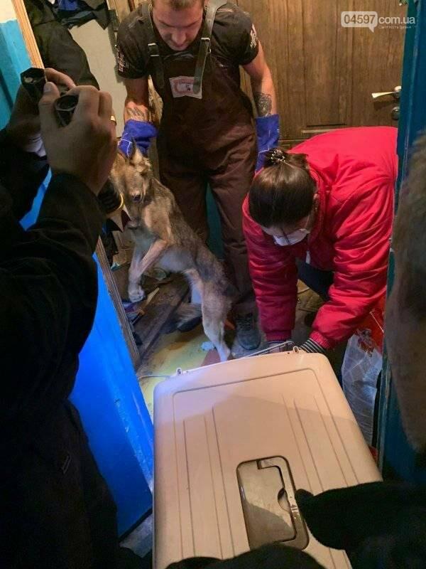 Собаки вили і стали в ряд провести її: сумний фінал про жінку, яка тримала 10 собак у квартирі, фото-3