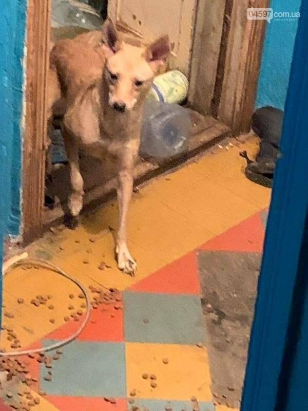 Собаки вили і стали в ряд провести її: сумний фінал про жінку, яка тримала 10 собак у квартирі, фото-7