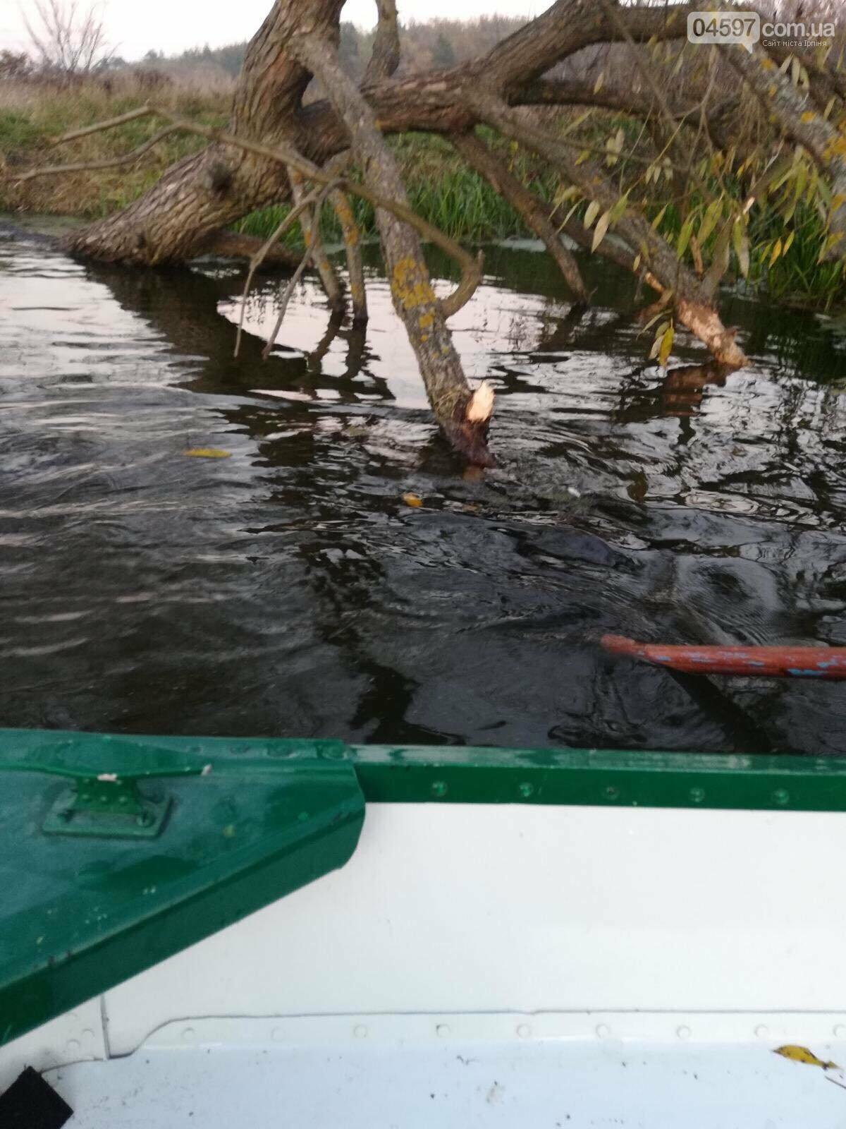 На Набережній Ірпеня живуть бобри, фото-3