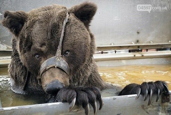 Годі знущатися: в уряді ініціюють звільнення циркових тварин, фото-1