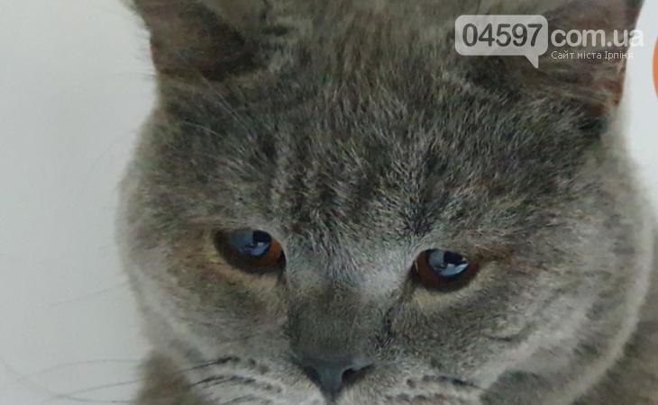 Зарили в яму: На Київщині господарі вивезли кота-інваліда в ліс помирати , фото-2