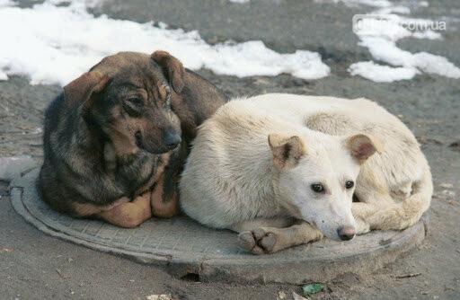 У Бучі стерилізуватимуть безпритульних тварин: куди звертатися, фото-2