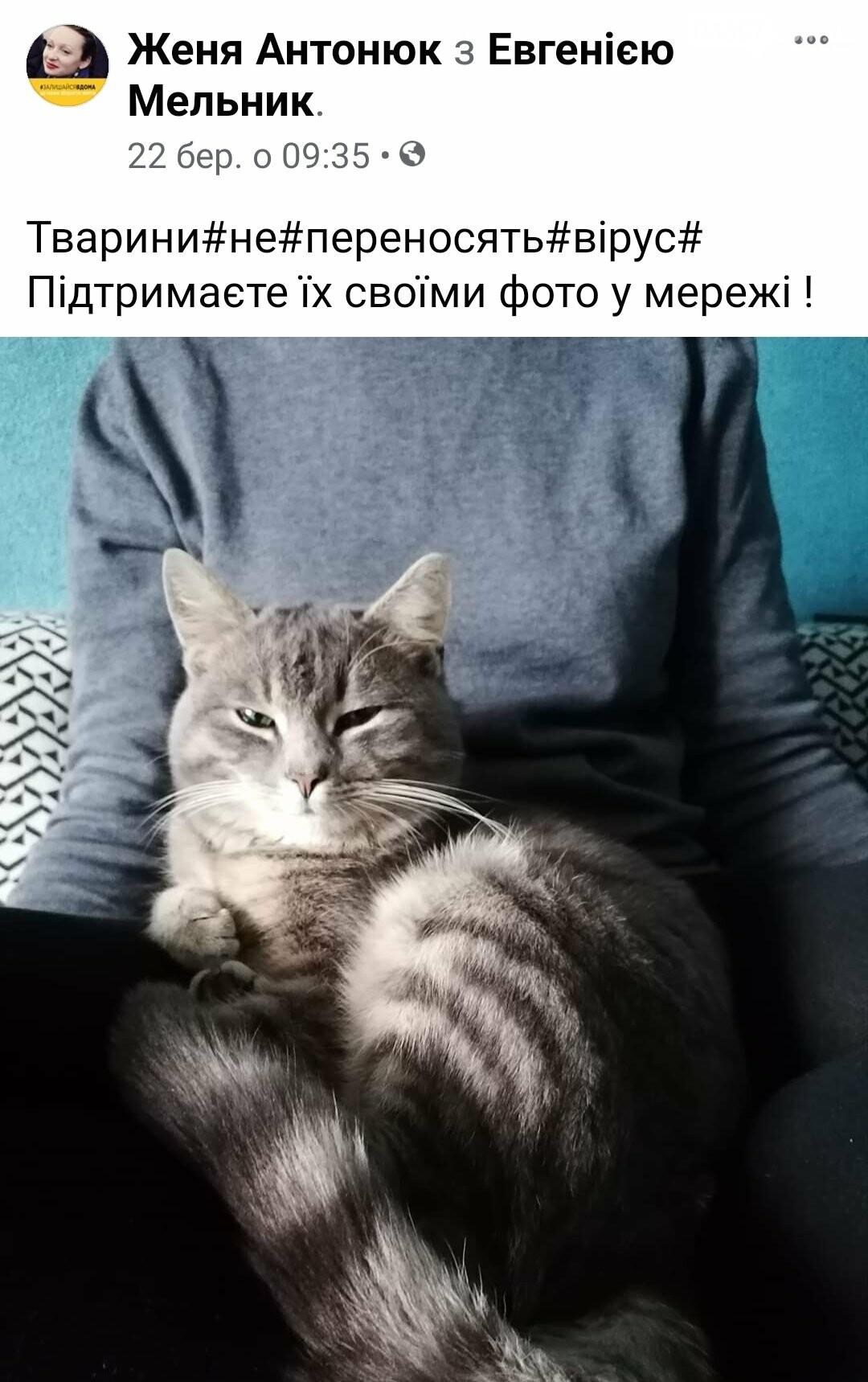 Тварини не заразні: в мережі шириться флешмоб на підтримку домашніх улюбленців, фото-1