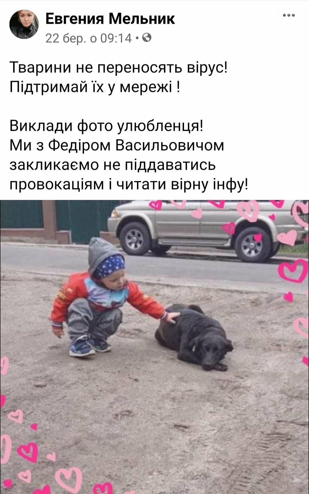 Тварини не заразні: в мережі шириться флешмоб на підтримку домашніх улюбленців, фото-2