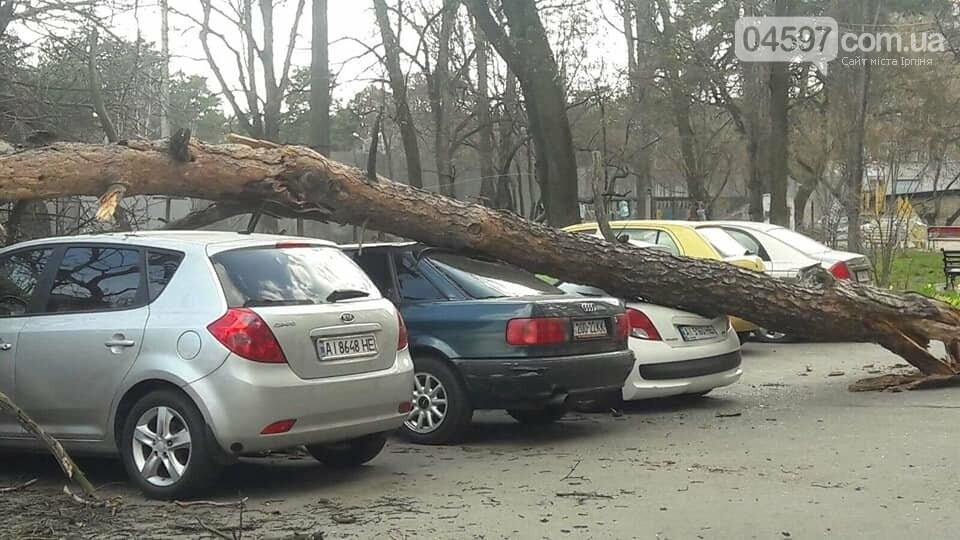 В Ірпені вітер звалив дерева прямо на автівки, фото-1