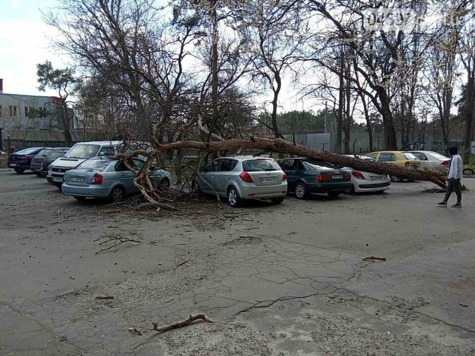 В Ірпені вітер звалив дерева прямо на автівки, фото-2
