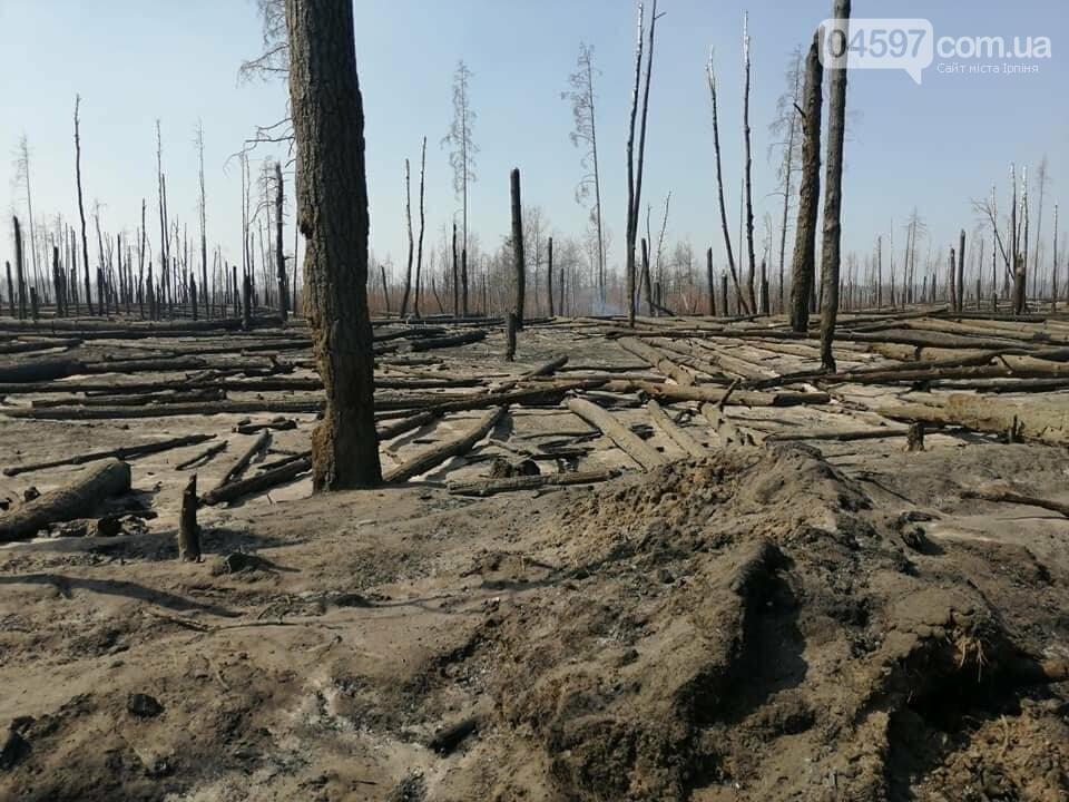 Як у фільмі жахів: пожежі в Чорнобилі знищили ліс та села, фото-15