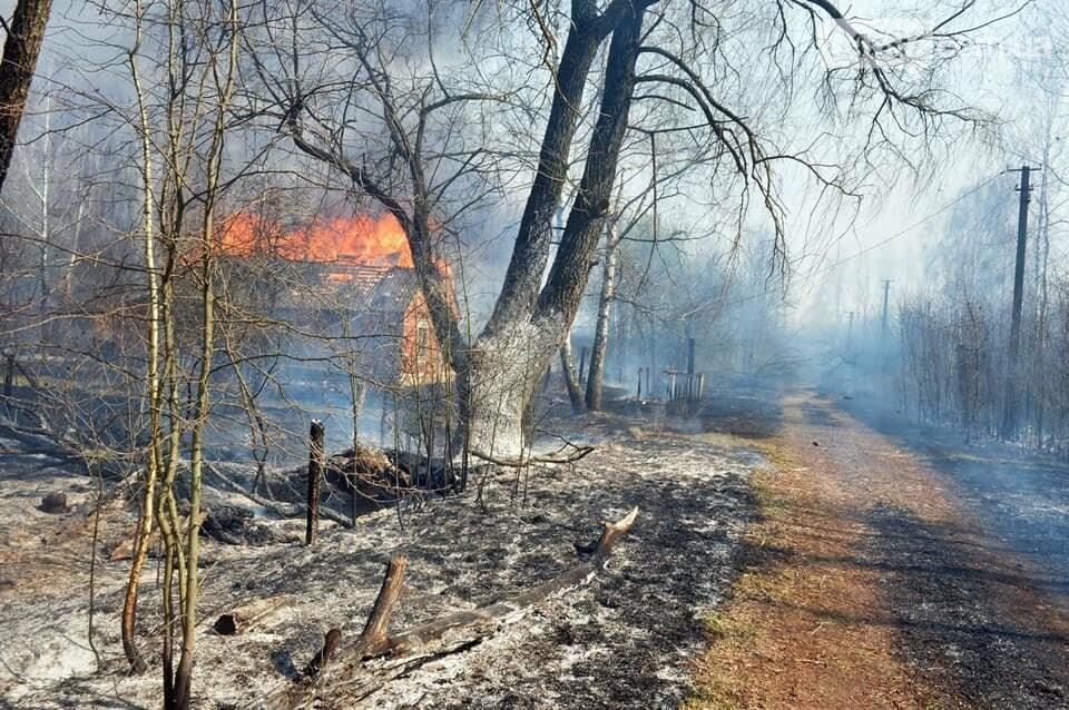 Як у фільмі жахів: пожежі в Чорнобилі знищили ліс та села, фото-8