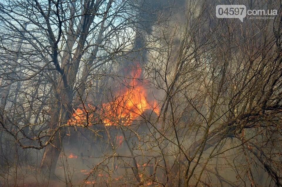 Як у фільмі жахів: пожежі в Чорнобилі знищили ліс та села, фото-7