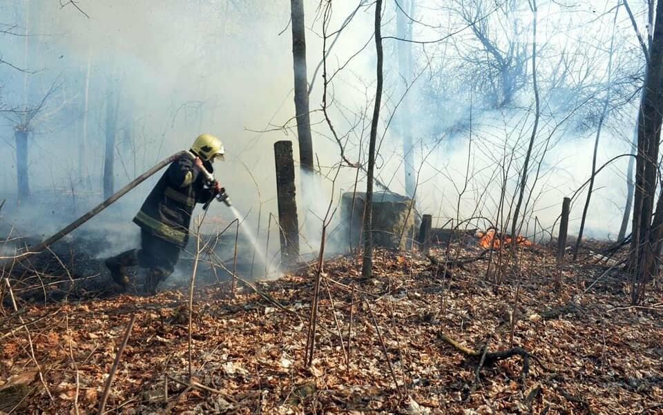Як у фільмі жахів: пожежі в Чорнобилі знищили ліс та села, фото-4