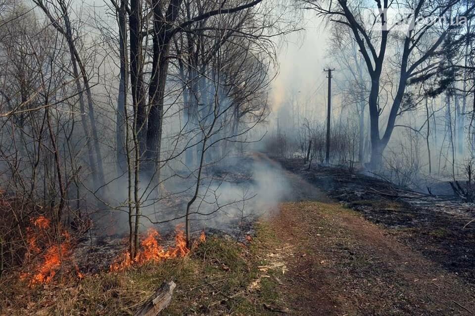 Як у фільмі жахів: пожежі в Чорнобилі знищили ліс та села, фото-2