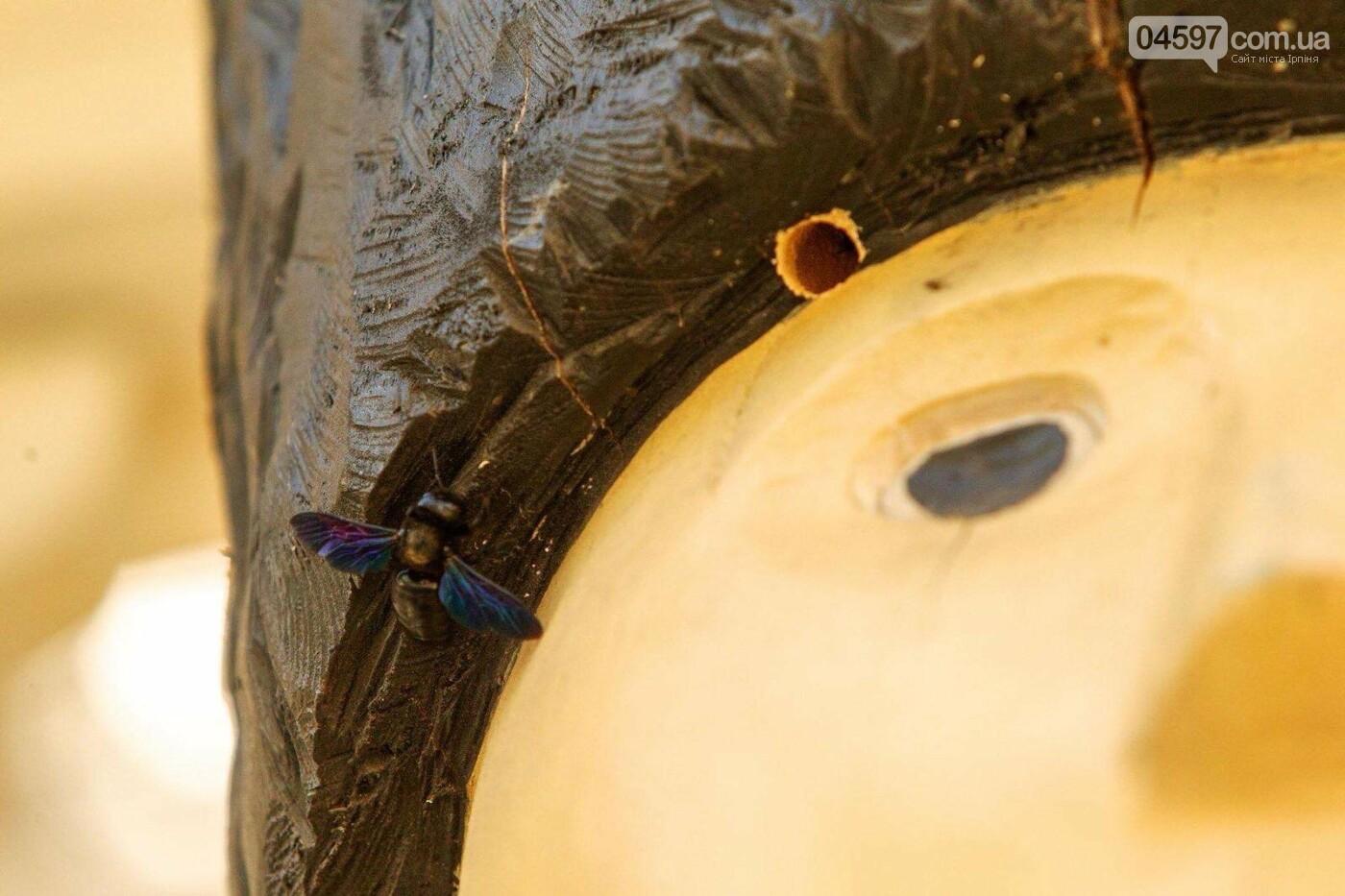 В Ірпені поселилися червонокнижні бджоли-теслі, фото-1