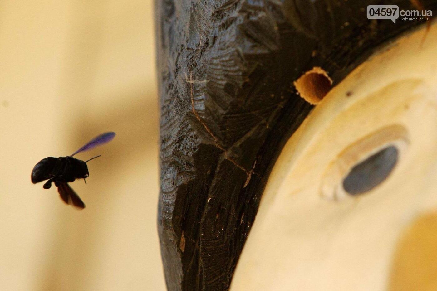 В Ірпені поселилися червонокнижні бджоли-теслі, фото-2