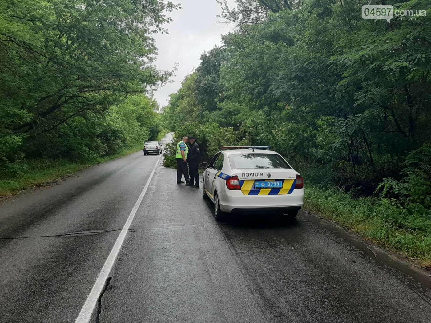 В Гостомелі дерево впало на дорогу, фото-3