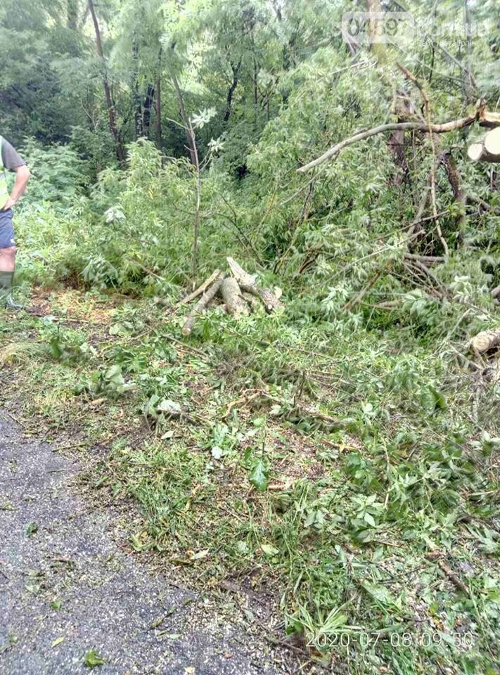 В Гостомелі дерево впало на дорогу, фото-2