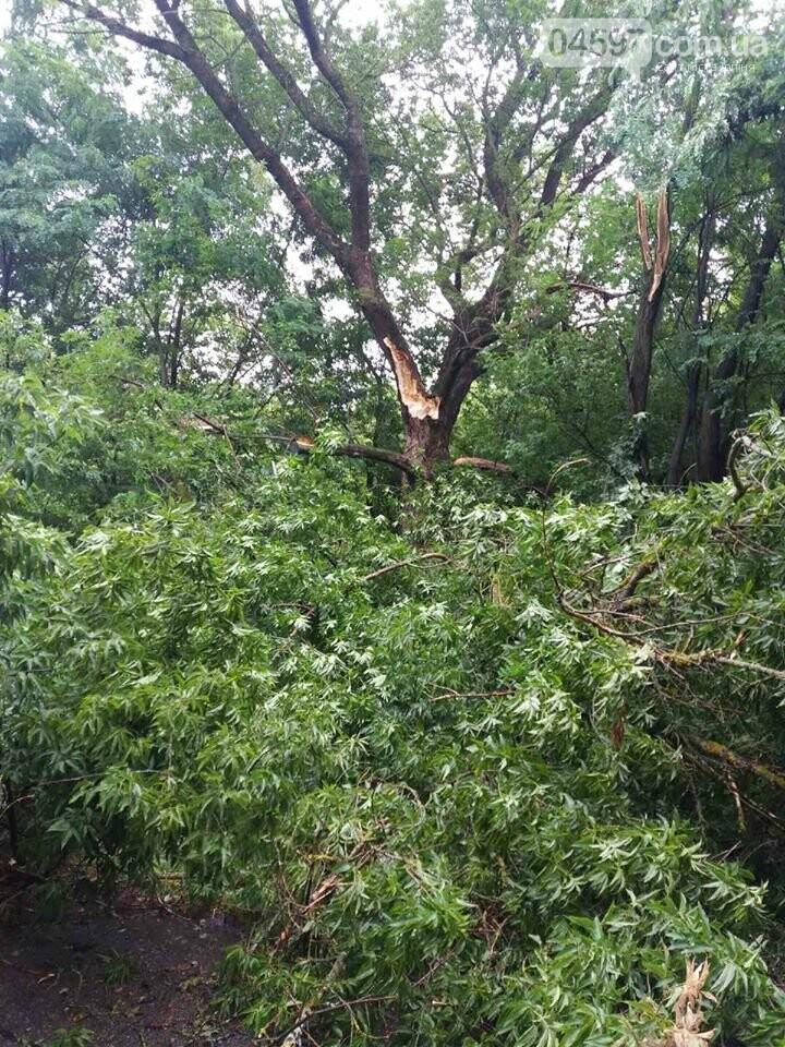 В Гостомелі дерево впало на дорогу, фото-1
