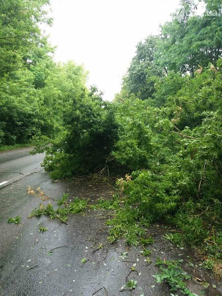 В Гостомелі дерево впало на дорогу, фото-4