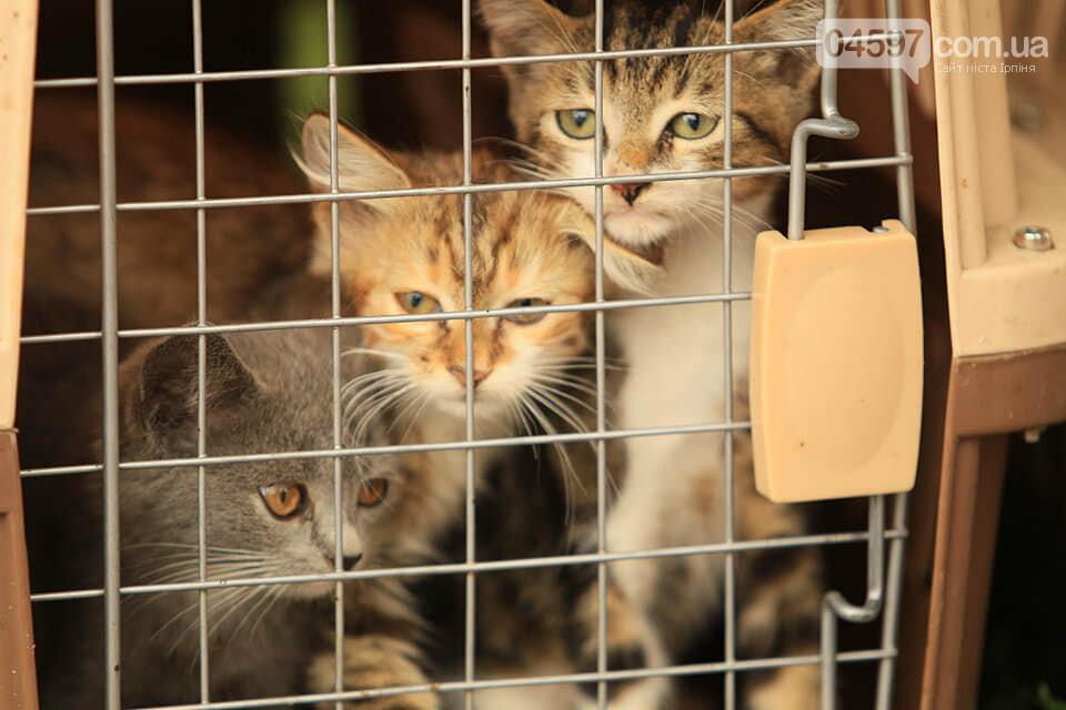 Подаруй пухнастику дім: в Ірпені роздаватимуть безпритульних кошенят, фото-3