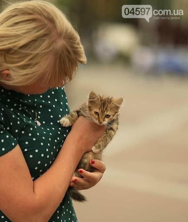 Подаруй пухнастику дім: в Ірпені роздаватимуть безпритульних кошенят, фото-1