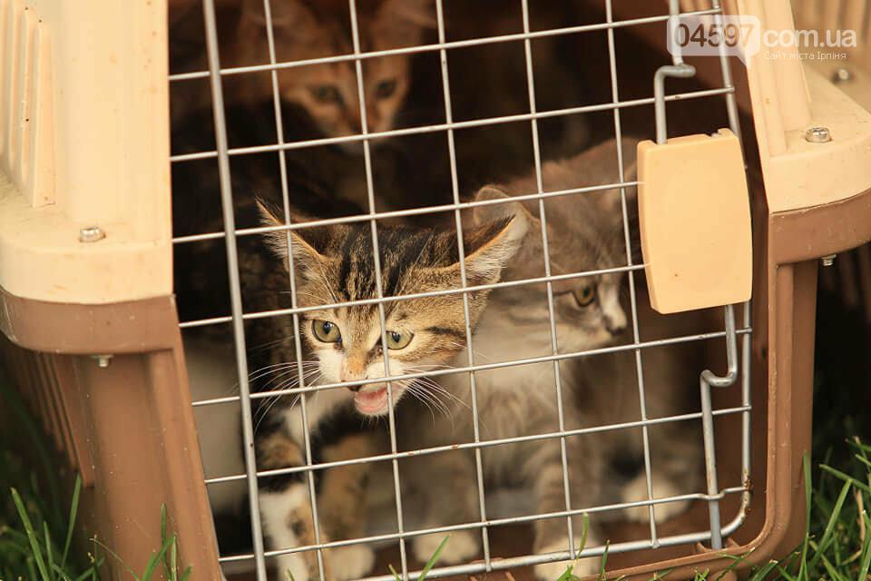 Подаруй пухнастику дім: в Ірпені роздаватимуть безпритульних кошенят, фото-2