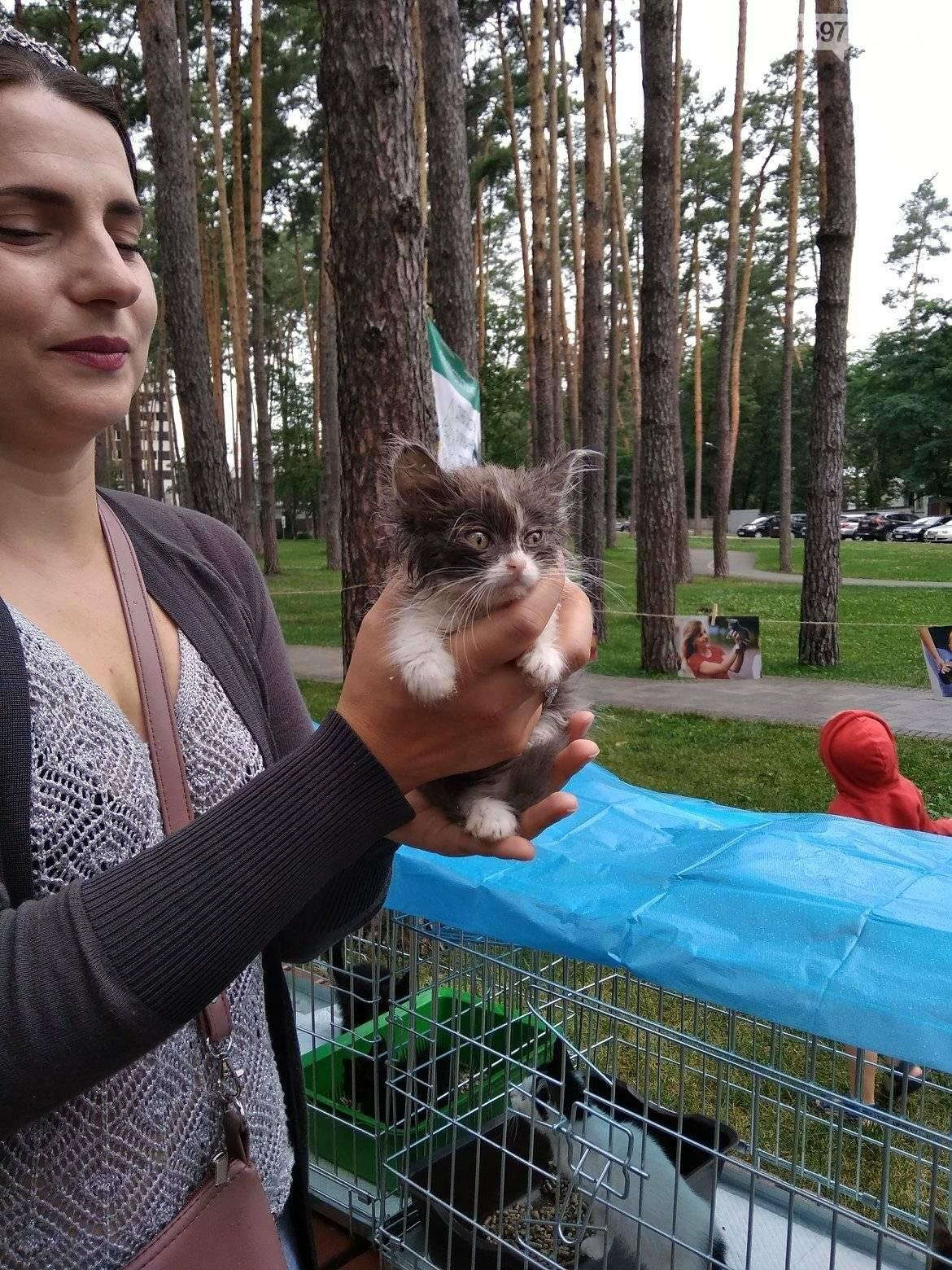 В Ірпені прилаштували 25 безпритульних кошенят (ВІДЕО), фото-1
