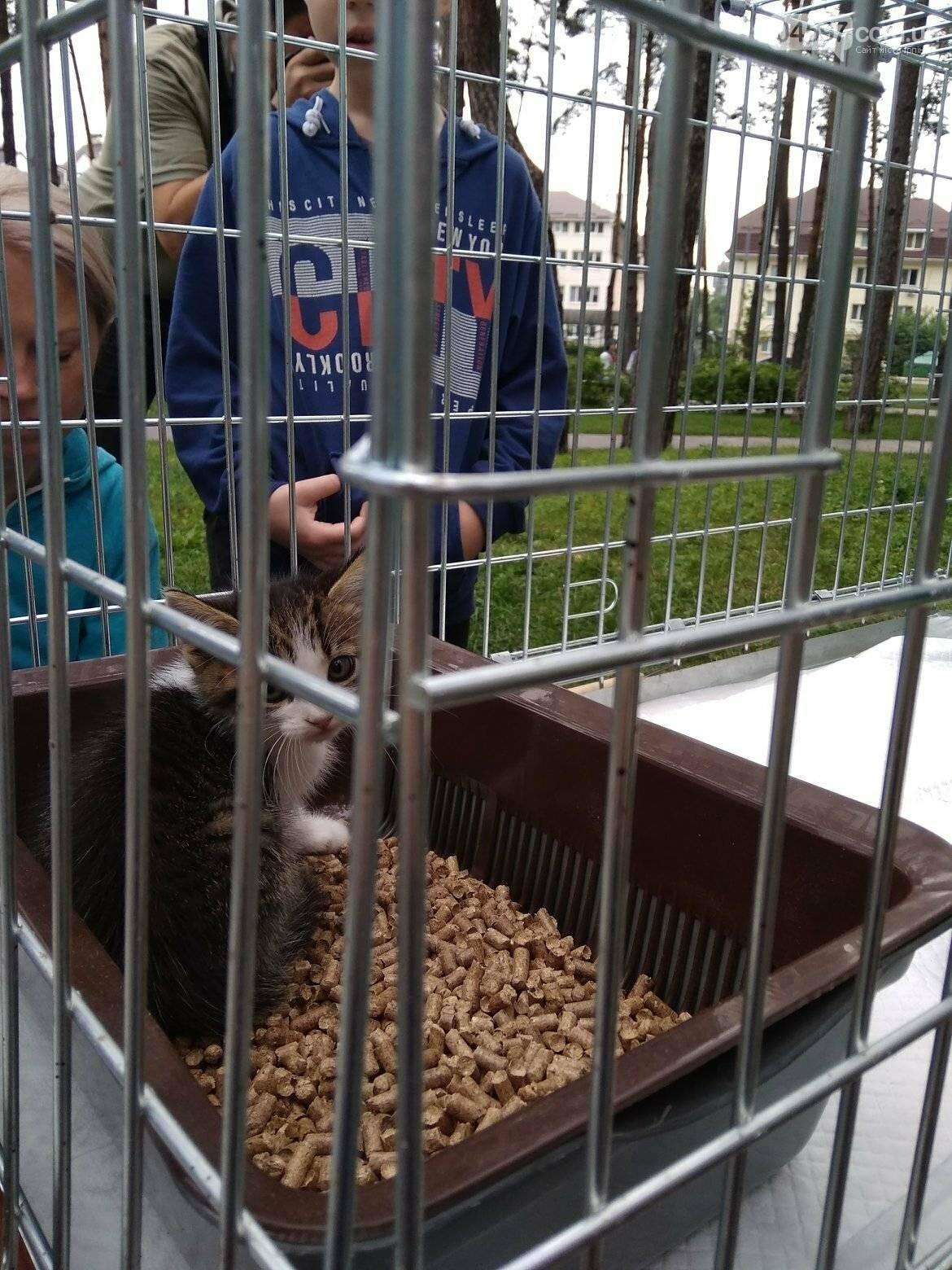 В Ірпені прилаштували 25 безпритульних кошенят (ВІДЕО), фото-3