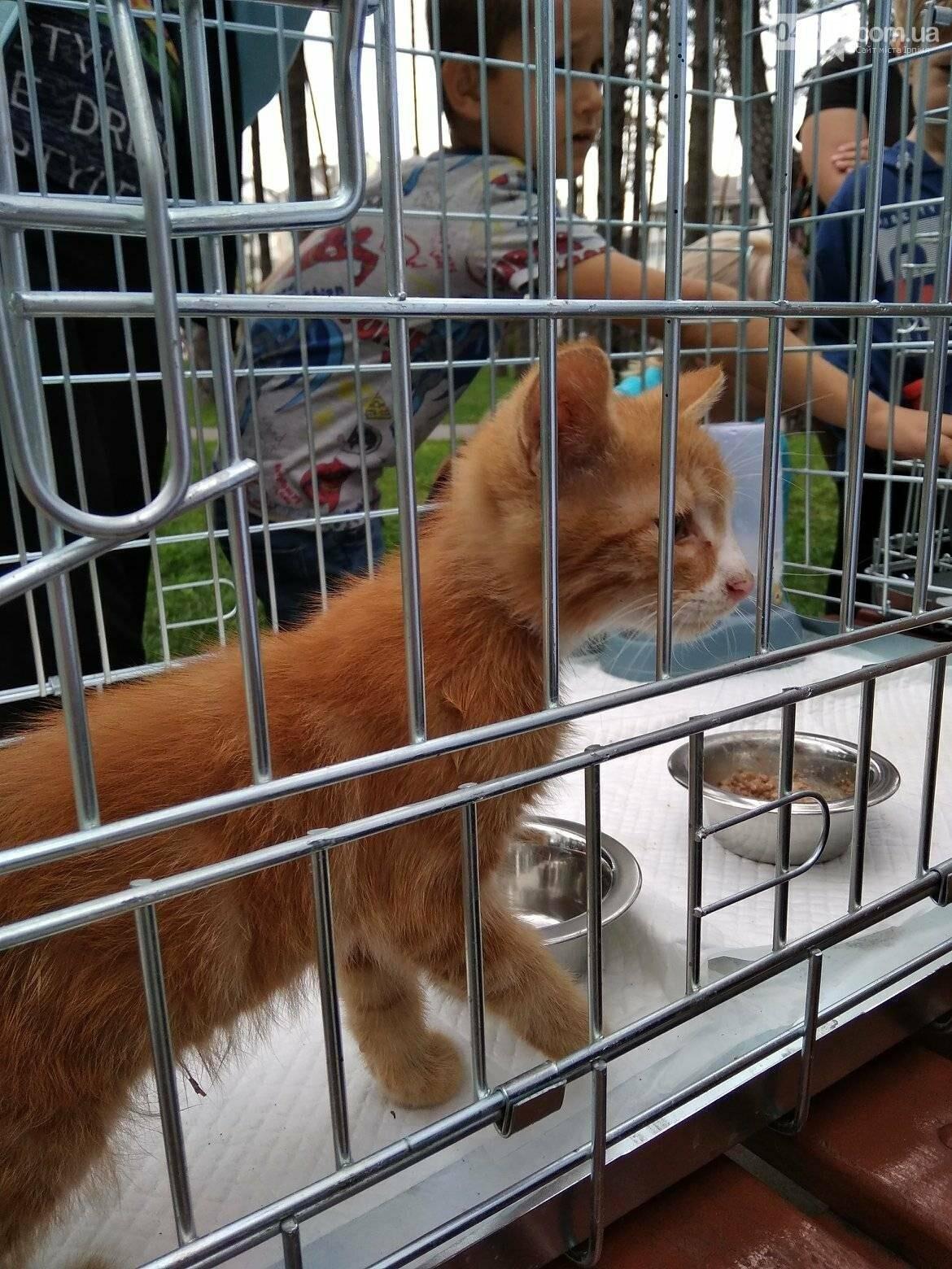 В Ірпені прилаштували 25 безпритульних кошенят (ВІДЕО), фото-5