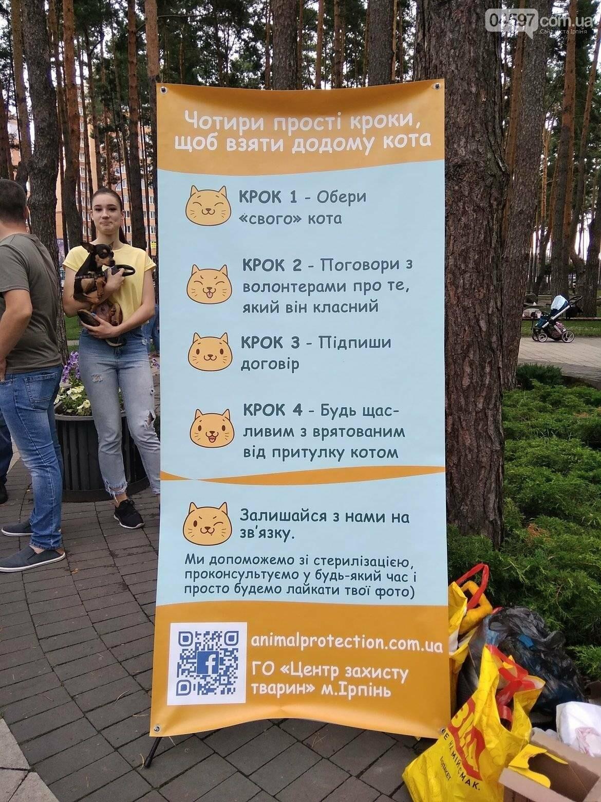 В Ірпені прилаштували 25 безпритульних кошенят (ВІДЕО), фото-6