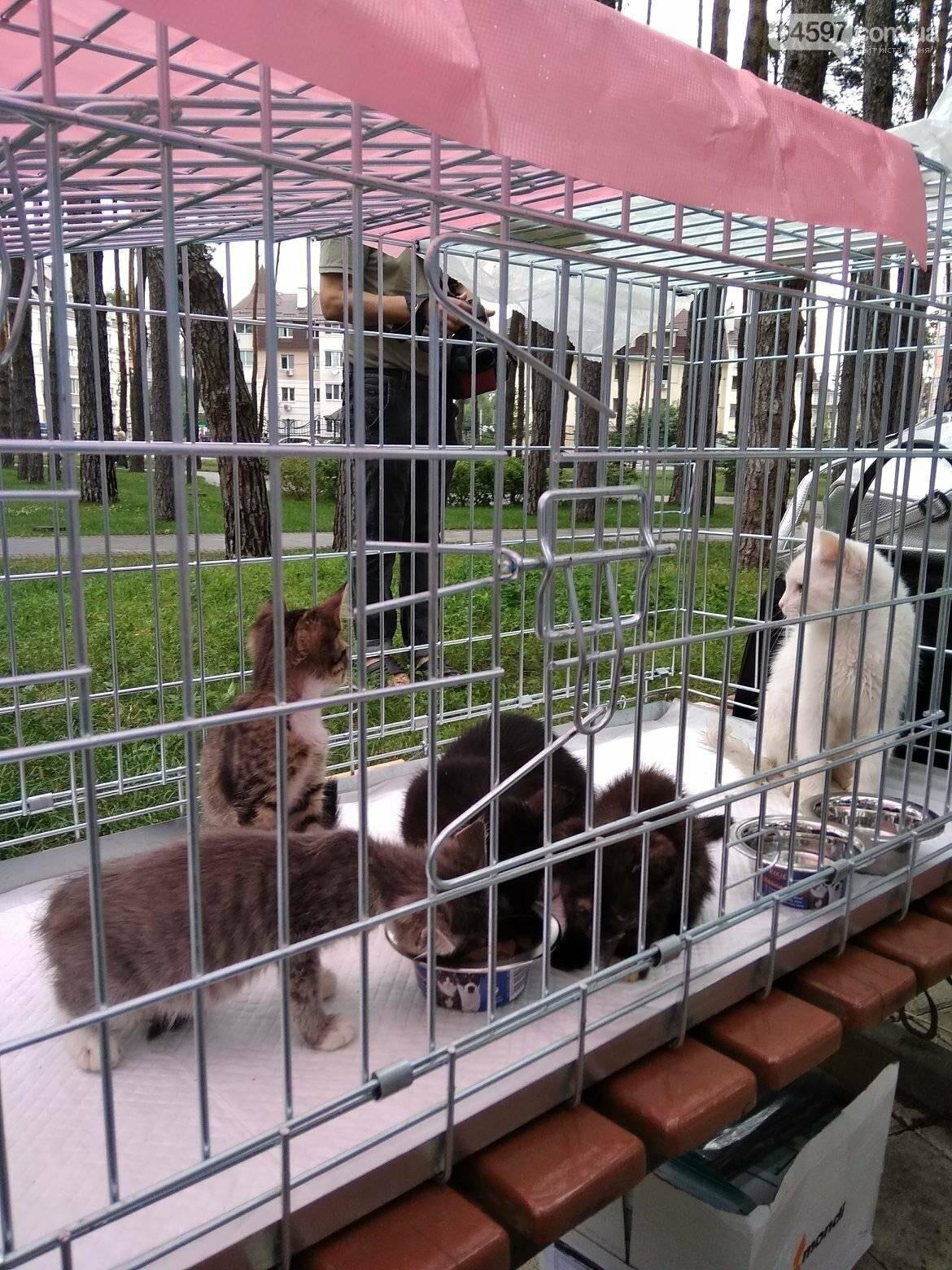 В Ірпені прилаштували 25 безпритульних кошенят (ВІДЕО), фото-2