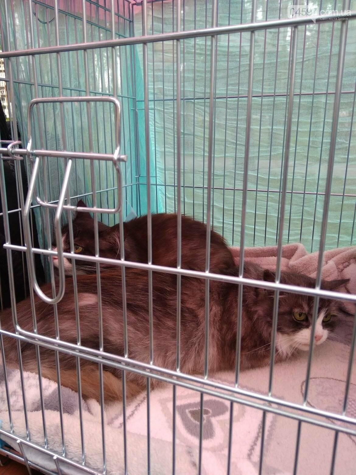 В Ірпені прилаштували 25 безпритульних кошенят (ВІДЕО), фото-7
