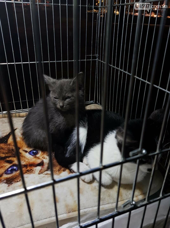 Кото-ярмарка в Ірпені: 26 кошенят стали домашніми, фото-1
