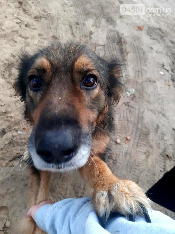 Кульгає і боїться людей: в Ірпені по-звірячому били собаку палицею (ВІДЕО), фото-1
