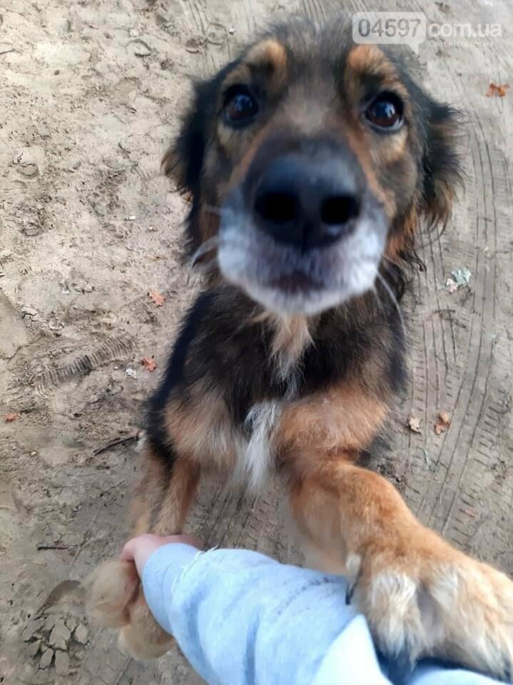 Кульгає і боїться людей: в Ірпені по-звірячому били собаку палицею (ВІДЕО), фото-2