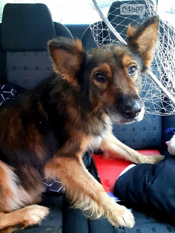 Кульгає і боїться людей: в Ірпені по-звірячому били собаку палицею (ВІДЕО), фото-3