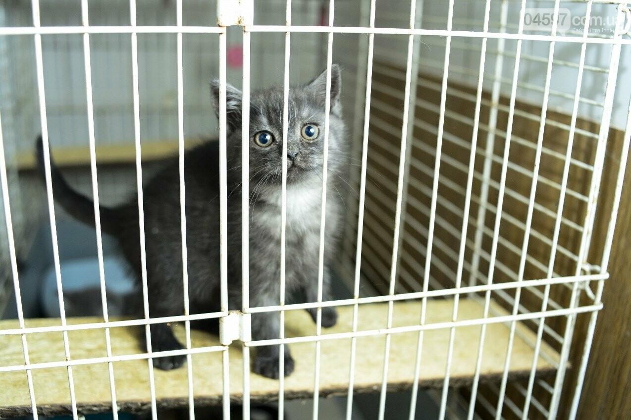У Ворзелі вперше проведуть кото-ярмарку, фото-1