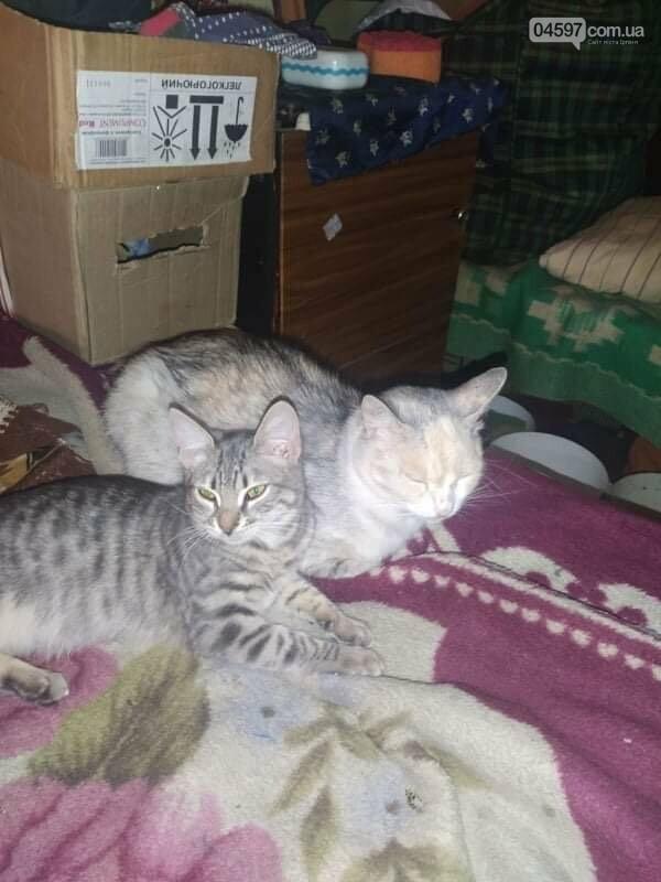 """Голодна смерть в Бучі: волонтери рятують 50 """"тюремних"""" котів, фото-3"""
