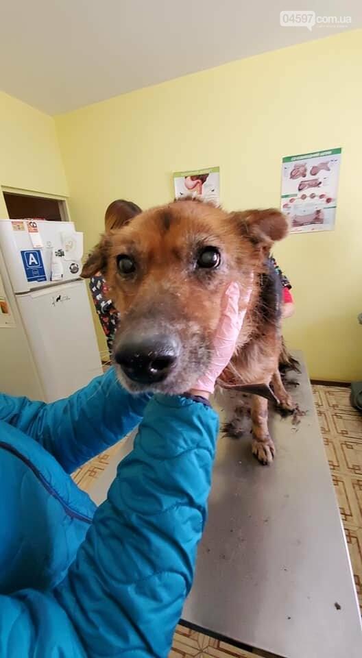 В Бучі горе-господарі змусили собаку гнити заживо (ВІДЕО 18+), фото-3