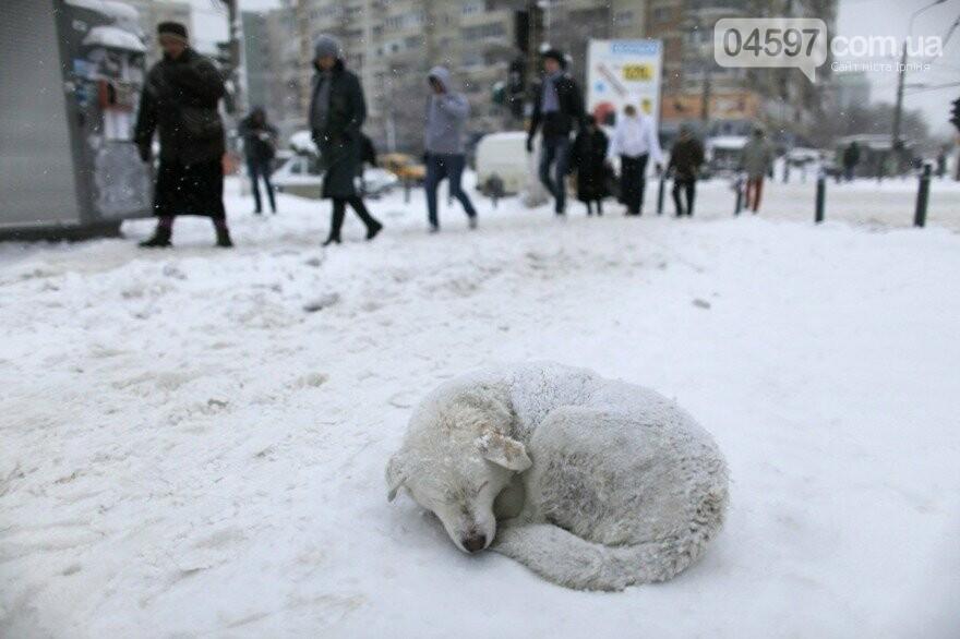 Допоможіть їм вижити: ірпінські волонтери закликають підгодовувати безпритульних тварин у морози, фото-1