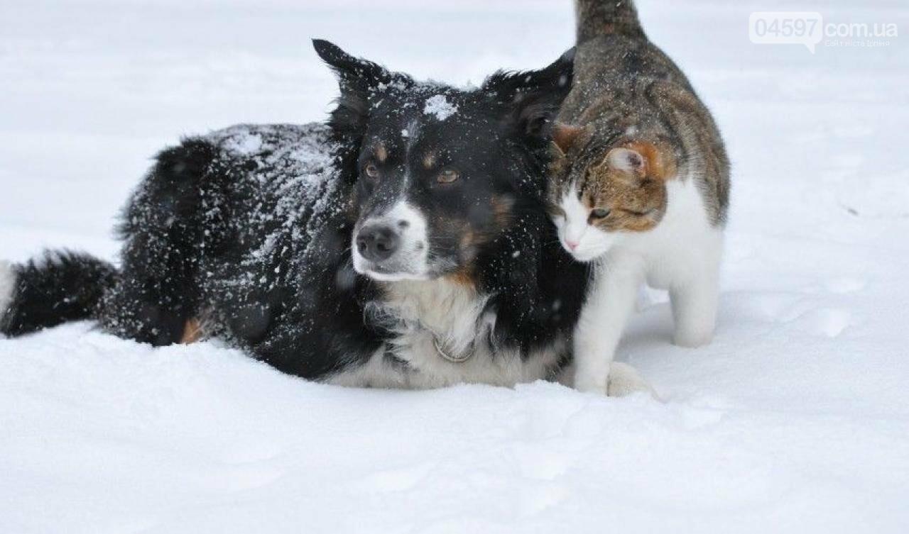Допоможіть їм вижити: ірпінські волонтери закликають підгодовувати безпритульних тварин у морози, фото-2