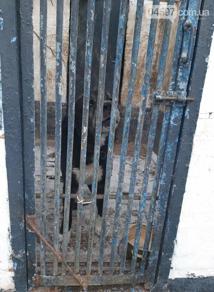 Службові собаки Буча, Бучанська колонія
