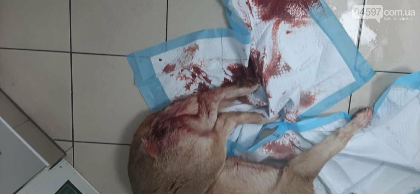 В Бучі під Києвом підстрелили собаку